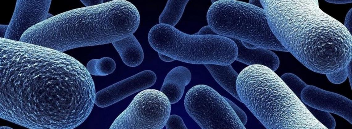 Антибактериальная обработка и устранение запаха
